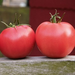 Seminte de rosii Griphon F1 (500 seminte)