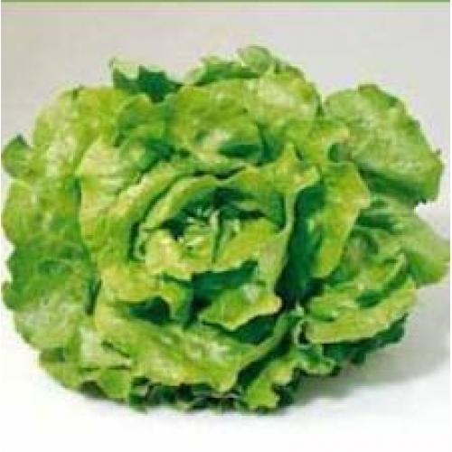 Seminte de salata Sunstar (5g)