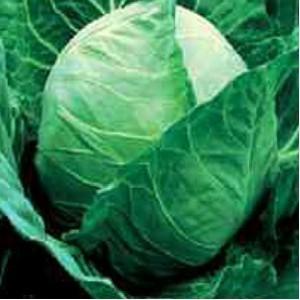 Seminte de varza Tucana (1000 seminte)