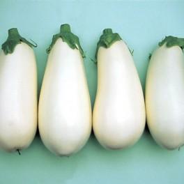 Seminte de vinete albe Bibo F1 (500 seminte)