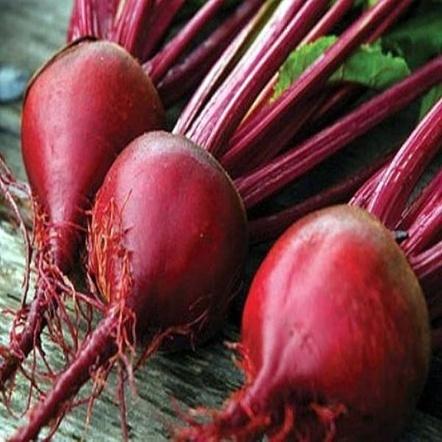 Seminte de sfecla rosie Manzu F1 (50.000 seminte)