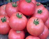 Seminte de tomate roz Dimerosa F1 (500 seminte)