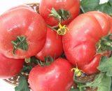 Seminte de rosii Rozalina Rossa F1 ( 5g )