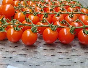 Seminte de rosii cherry Tredicy F1 ( 500 seminte )
