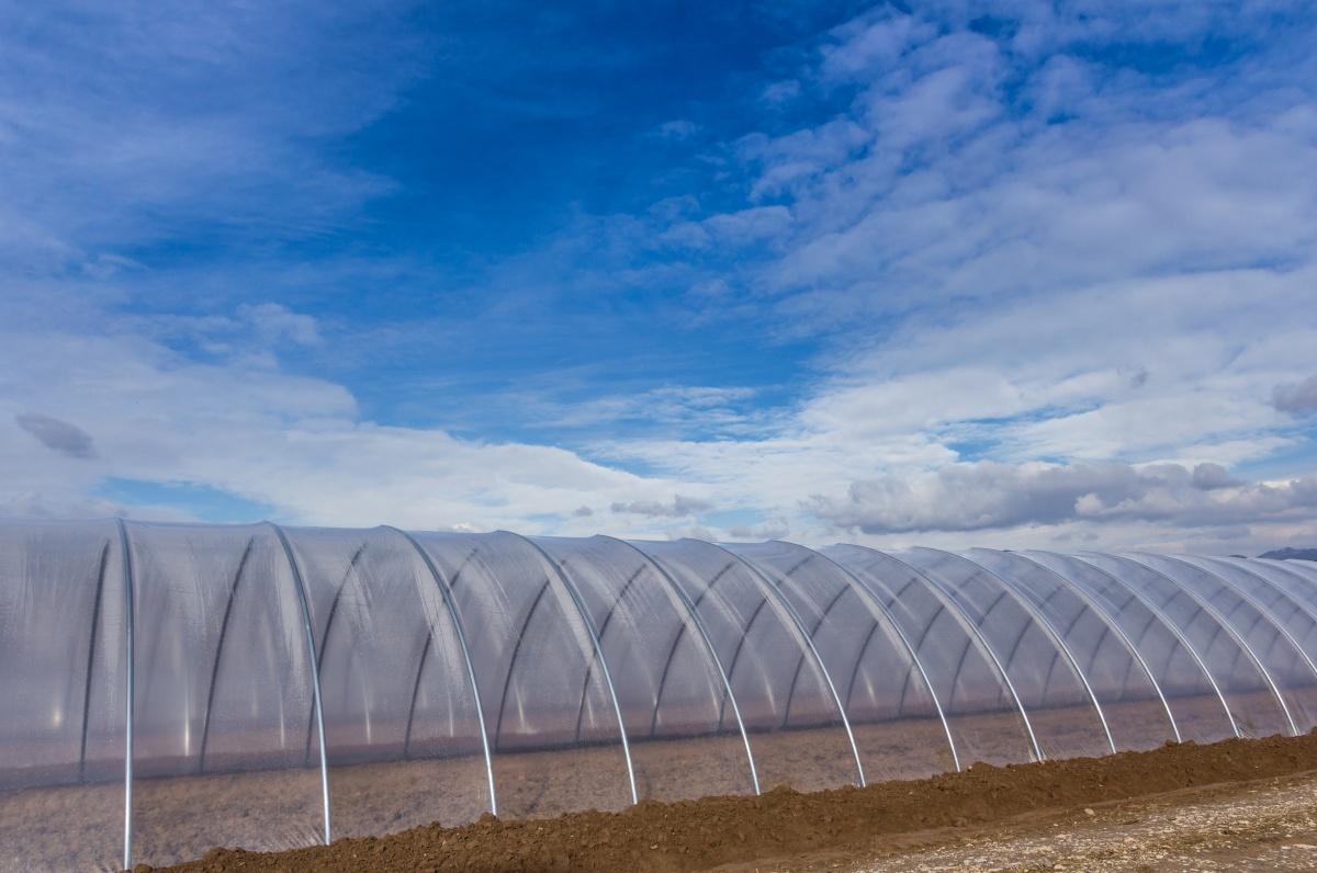 Folia de polietilenă pentru culturi agricole în sere/solarii
