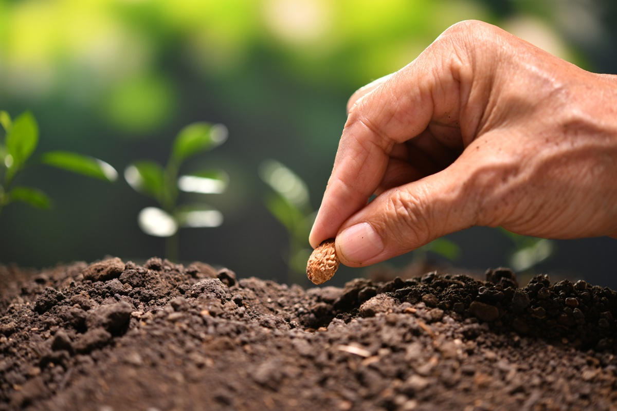 Seminte de legume: cum le alegi pe cele mai bune?