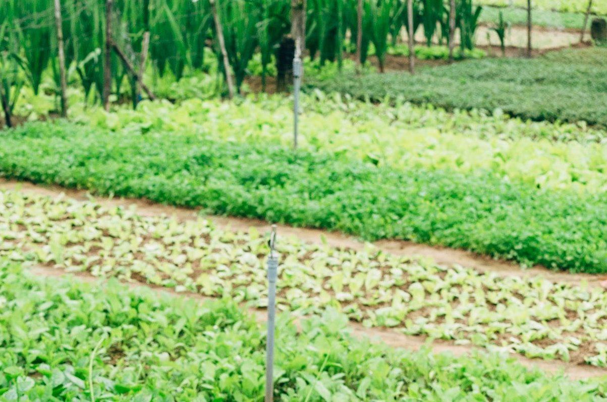 6 tipuri de legume de toamna