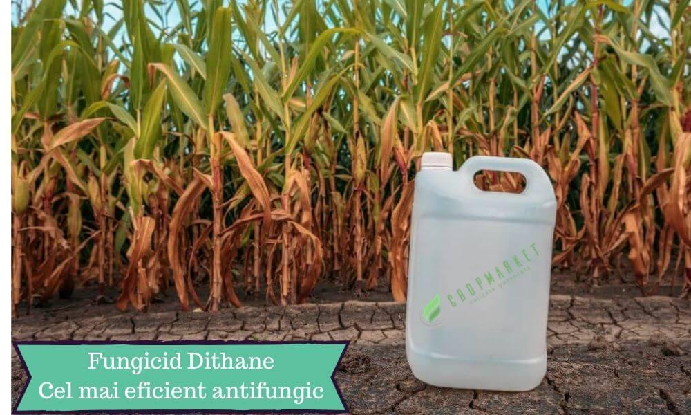 fungicid dithane