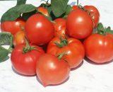 products seminte de rosii prekos f1 2500 seminte 160x130 - Piedone F1 (500 seminte)