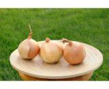 seminte de ceapa guimar 160x130 - Seminte R4593 (250000 seminte)