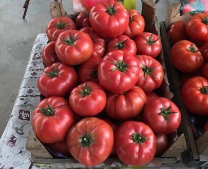 seminte de tomate roz manekro f1 405x330 - Manekro F1 (500 seminte)