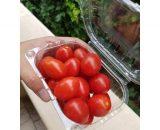 seminte tomate cherry 6 punto 7 f1 1000 seminte 160x130 - Jag 8810 F1 (10000 seminte)