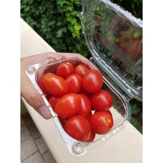 seminte tomate cherry 6 punto 7 f1 1000 seminte 570x570 - Seminte 6Punto7 F1 (1000 seminte)