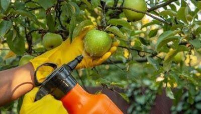 tratament pomi fructiferi