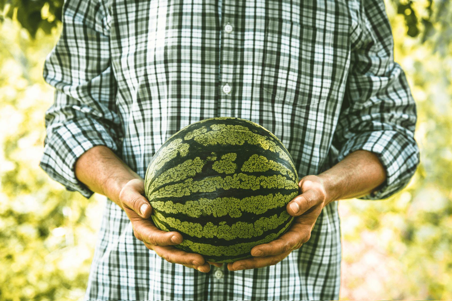Sfaturi pentru obtinerea unei culturi bogate de pepene verde