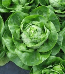 seminte salata janique - Seminte Janique F1 drajat ( 5000 seminte )