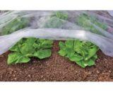 folie microporoasa agril 160x130 - Seminte Deliane ( 10 g )