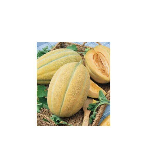 pepene hibrid F1 570x651 - Seminte Hibrid 1 F1