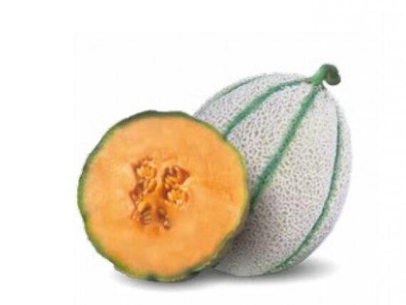 pepene macigno 570x428 - Seminte Macigno F1 ( 1000 seminte )