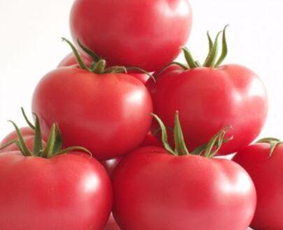 tomate manistella 405x330 - Manistella F1 (500 seminte)