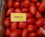 tomate mirely 160x130 - Corazon F1 ( 250 seminte )