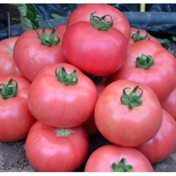 tomate rozy 570x570 - Seminte Rozy F1 ( 500 seminte )
