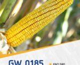 porumb gw0185 160x130 - Seminte GW4627 FAO 550 ( 50.000 seminte )