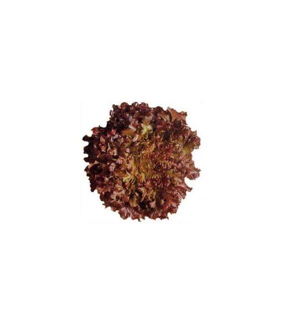 salata cherokee 570x651 - Seminte Cherokee RZ ( 1000 seminte )