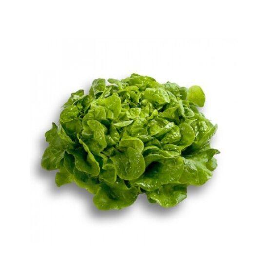 salata kimpo 570x570 - Seminte Kimpo ( 1000 seminte )