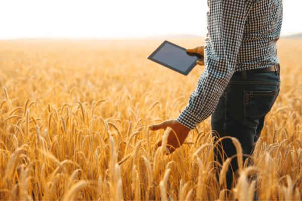 afacere agricultura - Ai in plan sa infiintezi o afacere in agricultura? Iata ce pasi trebuie sa urmezi!