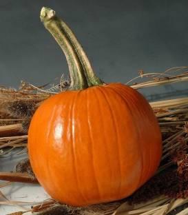 dovleac hallowen early abundance - Early Abundance F1 ( 500 seminte )